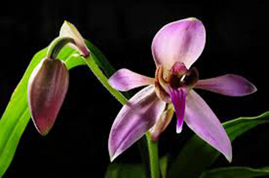 trồng và xuất khẩu phong lan