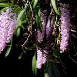 Clip hoa lan đẹp (sẽ cập nhật liên tục)