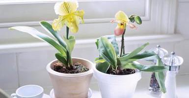 Hướng dẫn trồng hoa lan