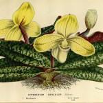 Đặc điểm, cách chăm sóc và phân loại các giống lan Việt Nam