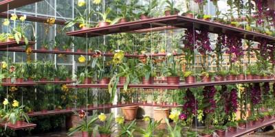 hướng dẫn trồng lan cho ngưới mới bắt đầu