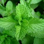 10 loại rau dại chữa được bệnh nan y mọc ngay trong vườn nhà bạn