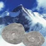 Tại sao trên dãy núi Himalaya có hóa thạch của những sinh vật đại dương?