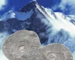 dãy núi Himalaya có hóa thạch của những sinh vật đại dương