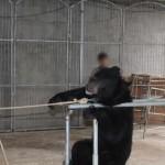 Tội ác kinh hoàng đằng sau ngành công nghiệp xiếc thú ở Trung Quốc