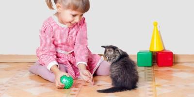 Bé mèo và bé người