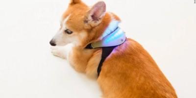 đồ chơi công nghệ đọc cảm xúc của chó cưng.
