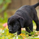 Part 2 – Chapter 8 – Meeting the Needs of Your Growing Puppy