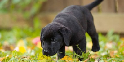Meeting the Needs of Your Growing Puppy