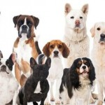 Part 2 – Chapter 6 – Interpreting Your Dog's Breed-Specific Traits