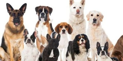 Part 2 - Chapter 6 - Interpreting Your Dog's Breed-Specific Traits