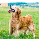 Part 1 – Chapter 4 – Seeing Life from Your Dog's Perspective