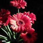 10 loại hoa được cắm trong gia đình xứ Bắc ngày Tết