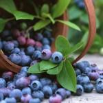 Sử dụng tia plasma khử sạch vi khuẩn trong rau quả