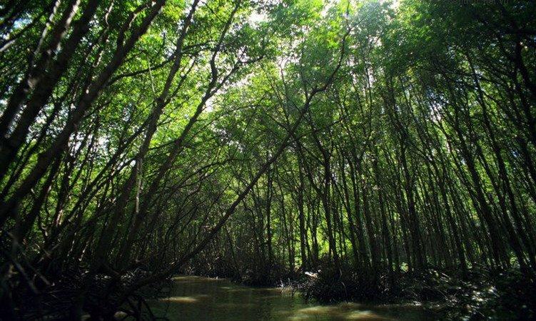 rừng ngập mặn cần giờ.