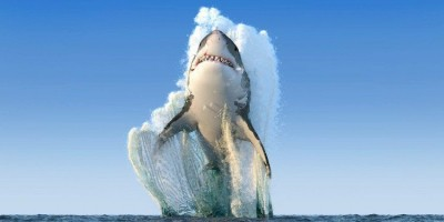 cá mập phóng lên.